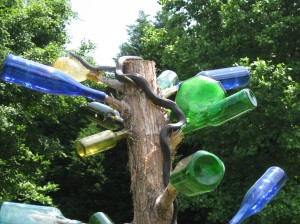 bottletree with rat snake