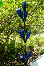 NC Botanical Garden blue bottle tree
