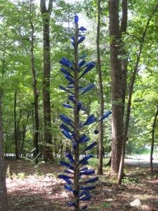 Blue Cedar Bottle Tree, St Marys Rd area