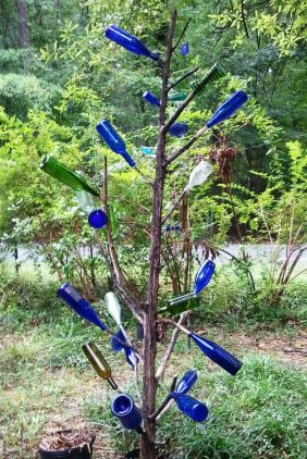 Wyrick St cedar bottletree 1