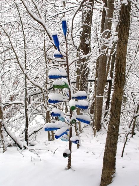 snowy bottletree 1